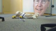 Iowa City Animal Care & Adoption Center