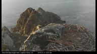 West End Bald Eagle Nest