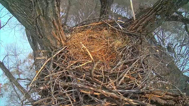 decorah chat Take a peek inside this massive bald eagle nest in decorah, iowa  chat is disabled for this live stream autoplay when autoplay is enabled,.