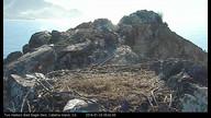 Two Harbors Bald Eagle Nest