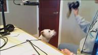 Iowa City Animal Care & Adoption