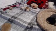Two Kittens Return to the Litter