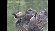 Eaglecrest Wildlife
