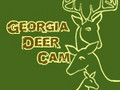 Georgia Deer Cam 1