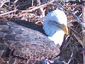 MNBound.com solar powered Eagle Cam