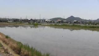 田植え 初夏(五郎丸東)