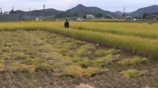 稲刈り風景(1)稲刈り機(犬山市羽黒)