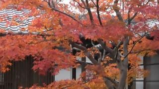 犬山市老連写真部・秋彩写真展(小弓の庄)